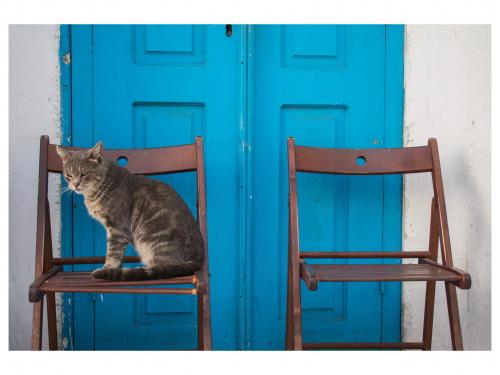 Keara Meehan - Mykonos Cat